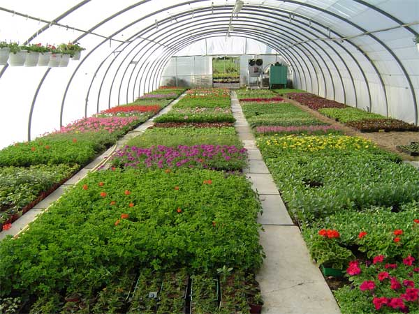 Developing Goals and Activities in Horticultural Therapy Programming
