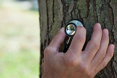 Tree Inspection – TheBasics
